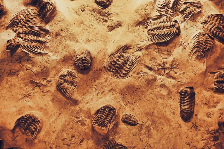 close-up-photo-of-fossils